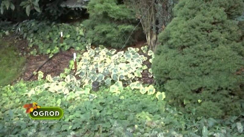 jak stworzyc wymarzony ogrod czesc 5 blog budowlany mg projekt 800x450 - Jak stworzyć wymarzonyogród?Część 5.
