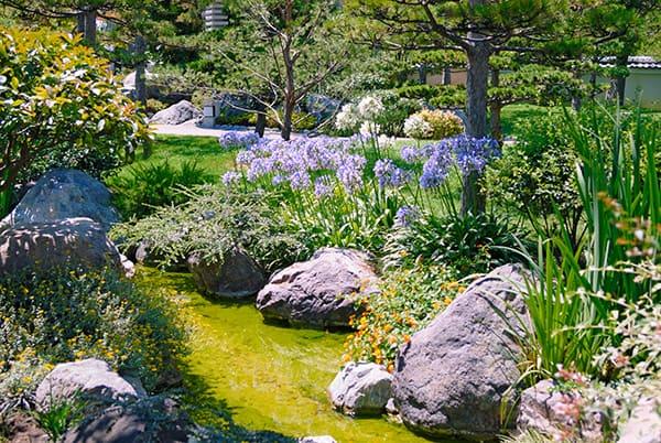 naturalny ogrod