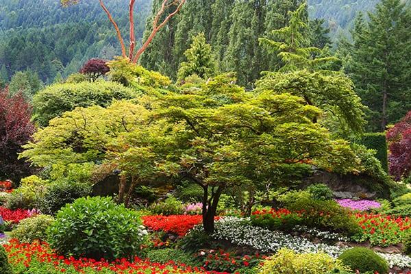 ogrod kwiaty drzewa krzewy