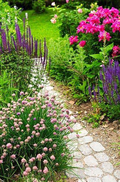 rosliny ogrodzie naturalistycznym