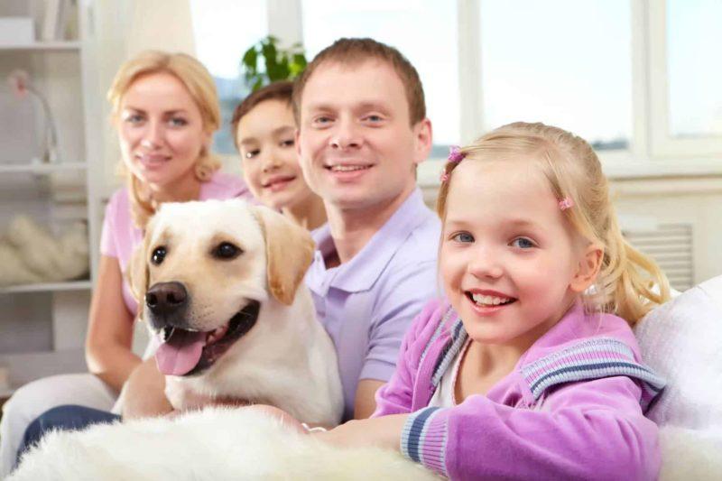 Zwierzęta w domu: jak stworzyć dom przyjazny zwierzętom?