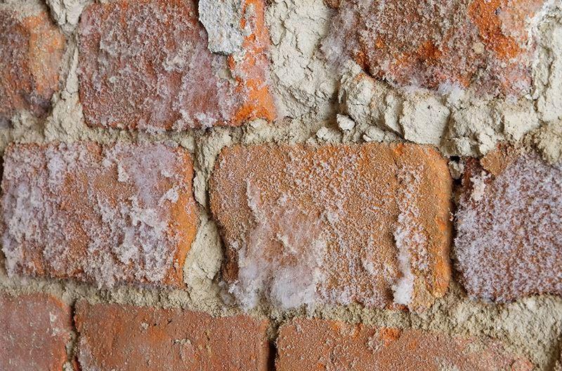 Pleśń na ścianie pod tynkiem
