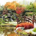 Oczko wodne w ogrodzie: jak założyć i dbać o staw kąpielowy?