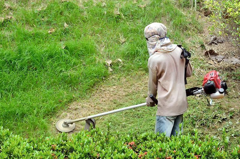 Ogromnie Koszenie trawy: jak, czym i kiedy powinno się kosić trawnik? TQ68
