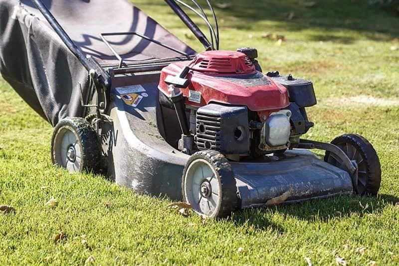 Aktualne Koszenie trawy: jak, czym i kiedy powinno się kosić trawnik? CX47