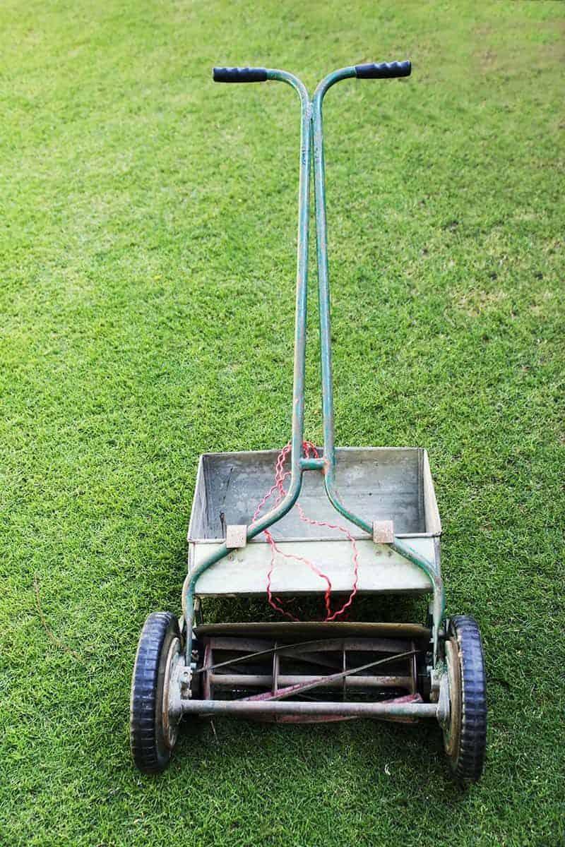 W superbly Koszenie trawy: jak, czym i kiedy powinno się kosić trawnik? KS99