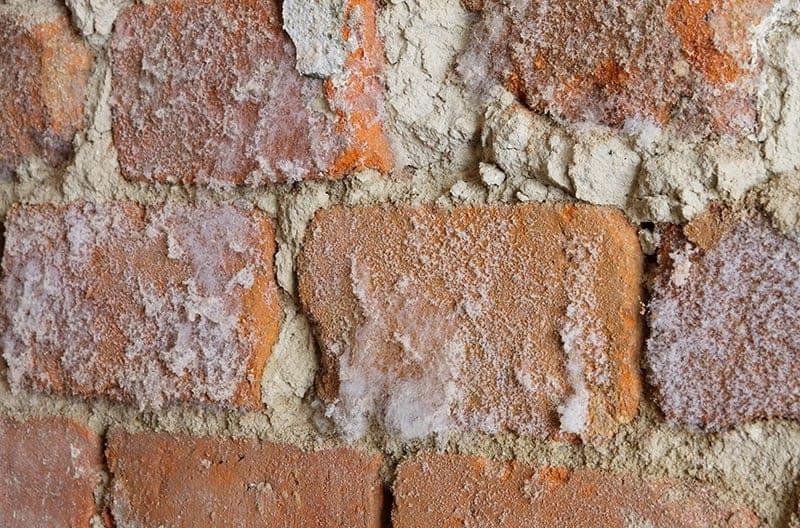 Zawilgocenie ścian domu