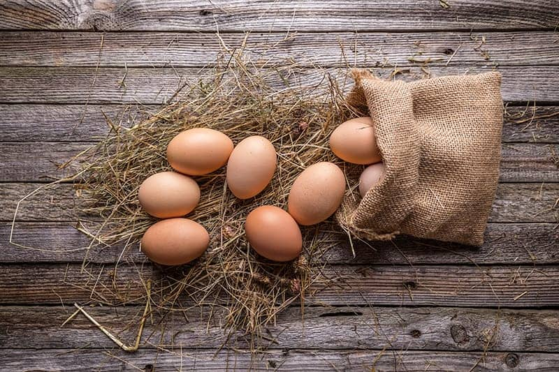 Przydomowy kurnik jajka