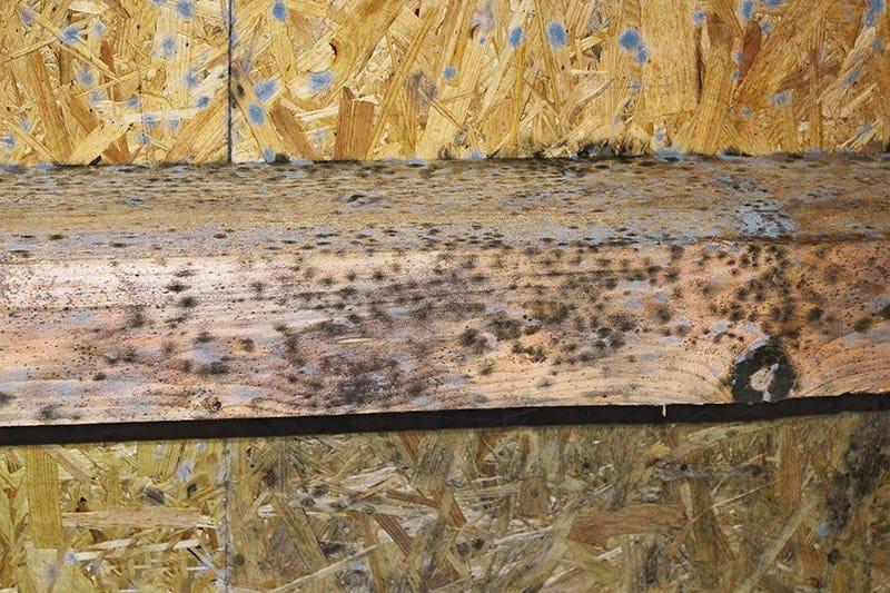 Jak zrobić strop drewniany?