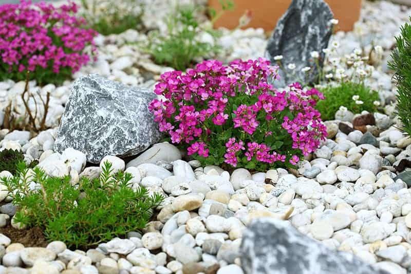 Kwiaty ogrodowe do ogrodu skalnego