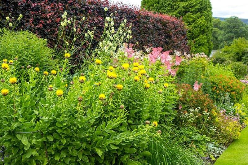 Krzewy do ogrodu