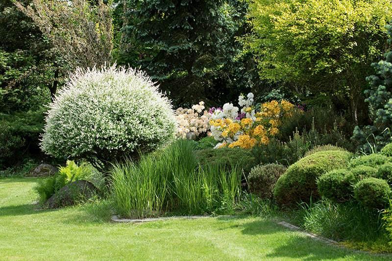Krzewy ozdobne do ogrodu