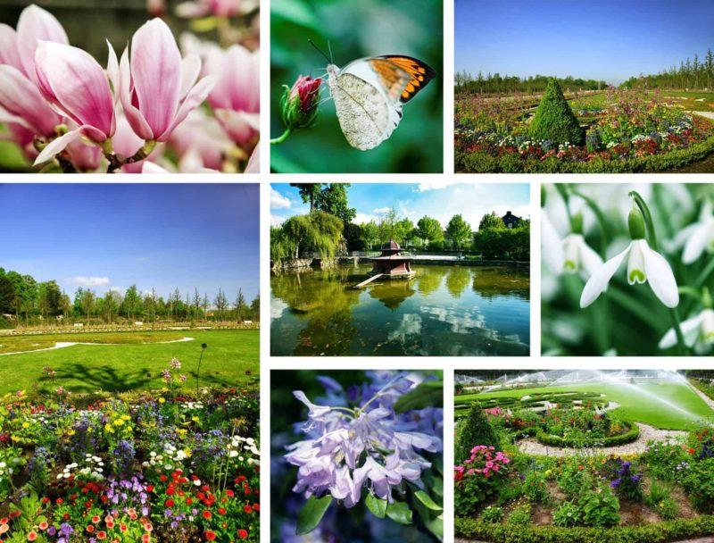 Kwiaty ogrodowe: jakie wybrać kwiaty ogrodowe wieloletnie?
