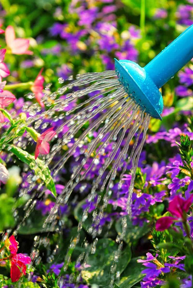 Kwiaty ogrodowe wiosenne - podlewanie