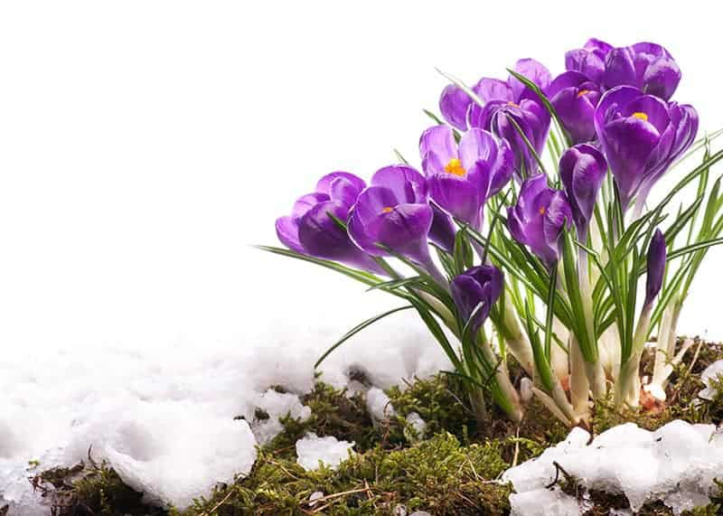 Kwiaty ogrodowe wiosenne