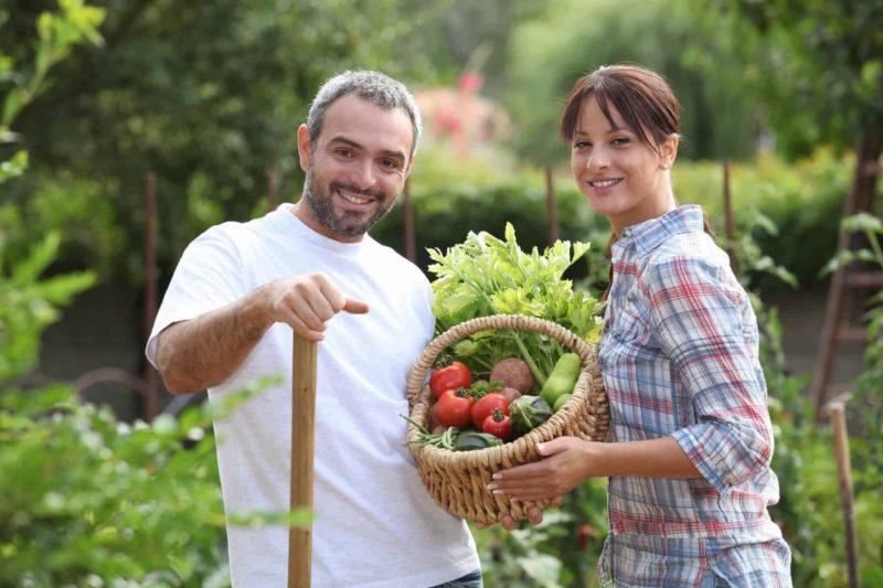 Ogród warzywny przy domu: koszt i zakładanie warzywnika [krok po kroku]