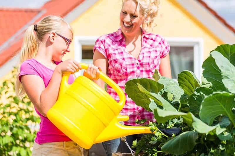 Ogród warzywny przy domu