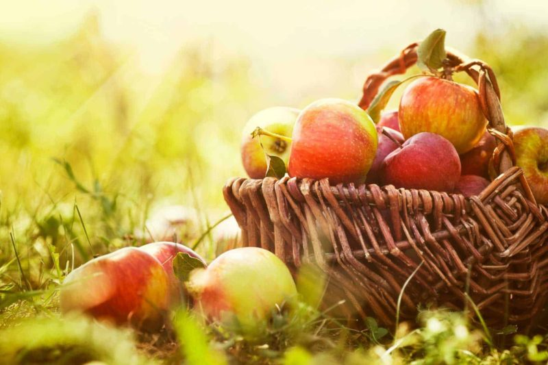 Sad owocowy: jak założyć mały sad przydomowy?