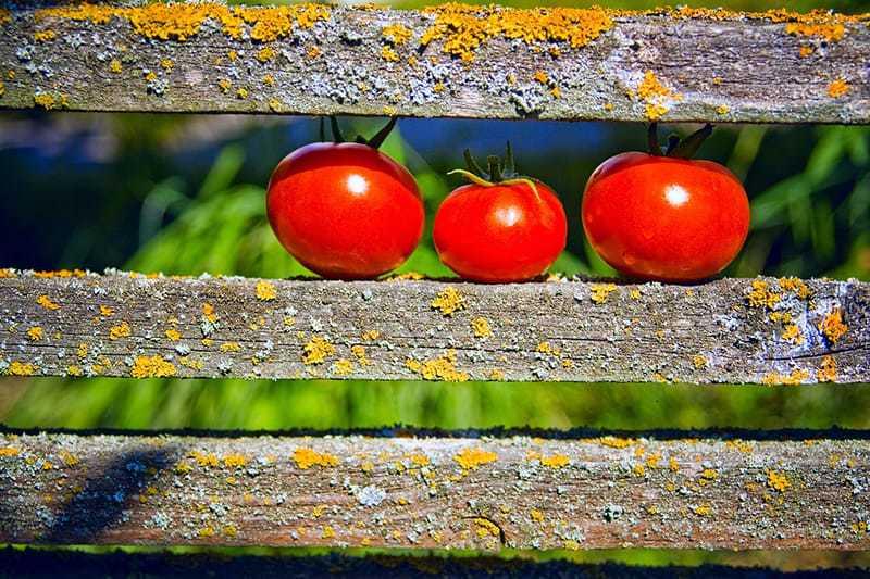 Planowanie ogrodu warzywnego