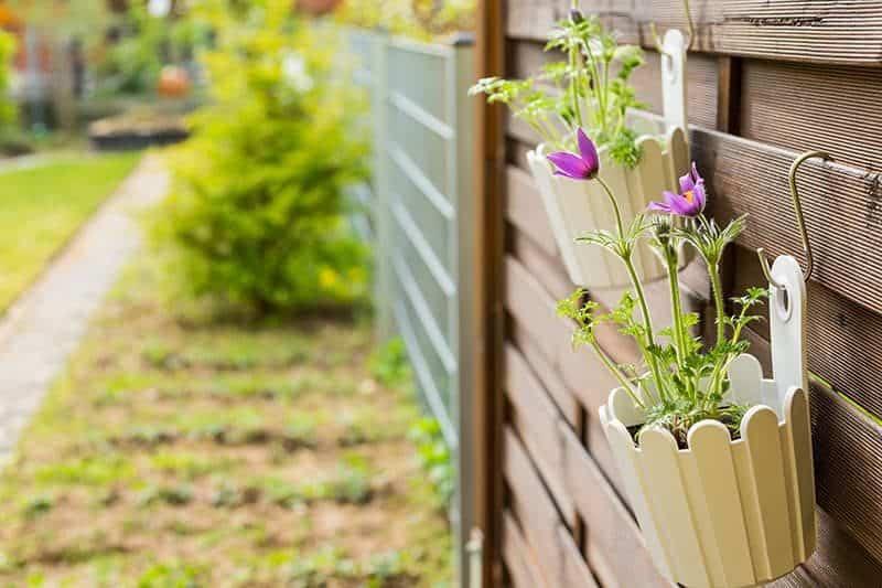 zywoplot szybko rosnacy 800x533 - Żywopłot: krzew na żywopłoty, sadzenie i przycinanie