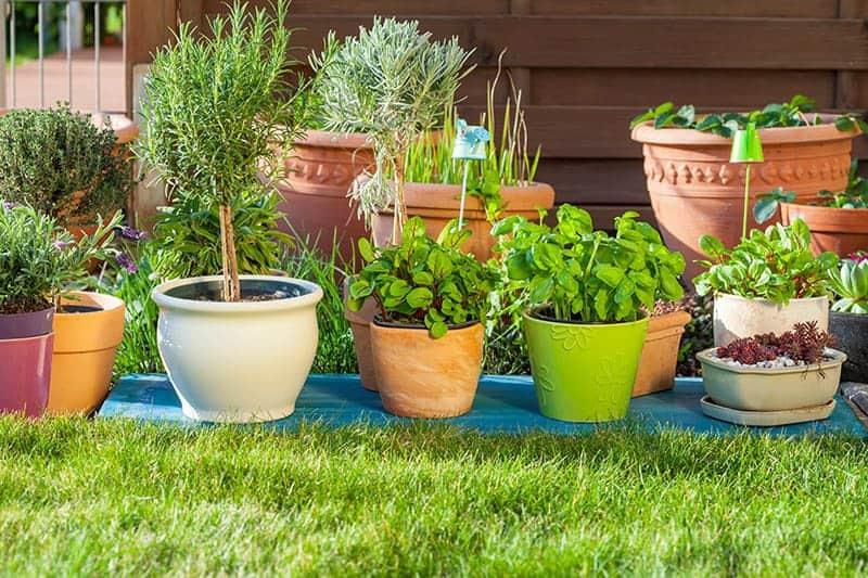 Rośliny na zielony dach