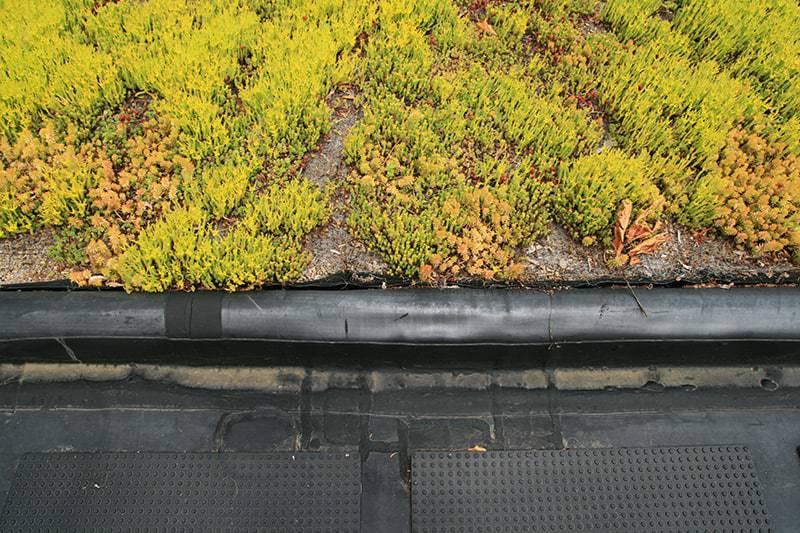 Czym jest zielony dach?