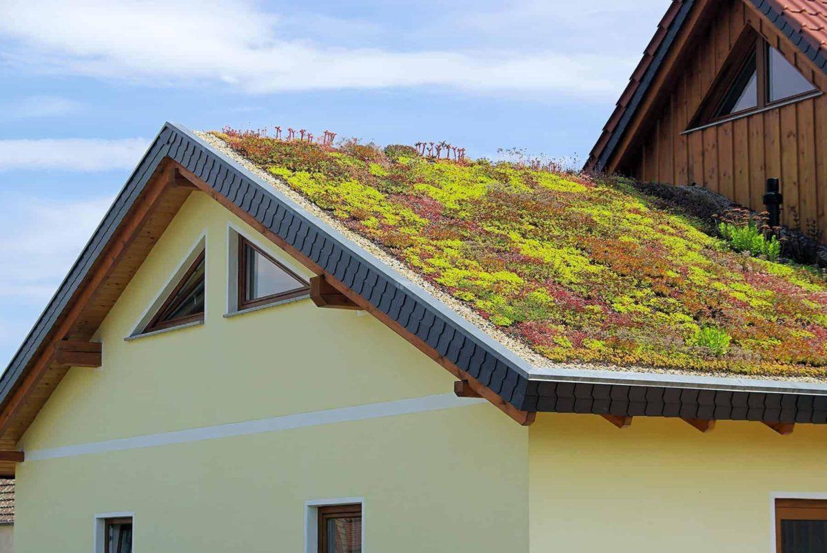 Zielony dach: warstwy, cena i konstrukcja zielonego stropodachu