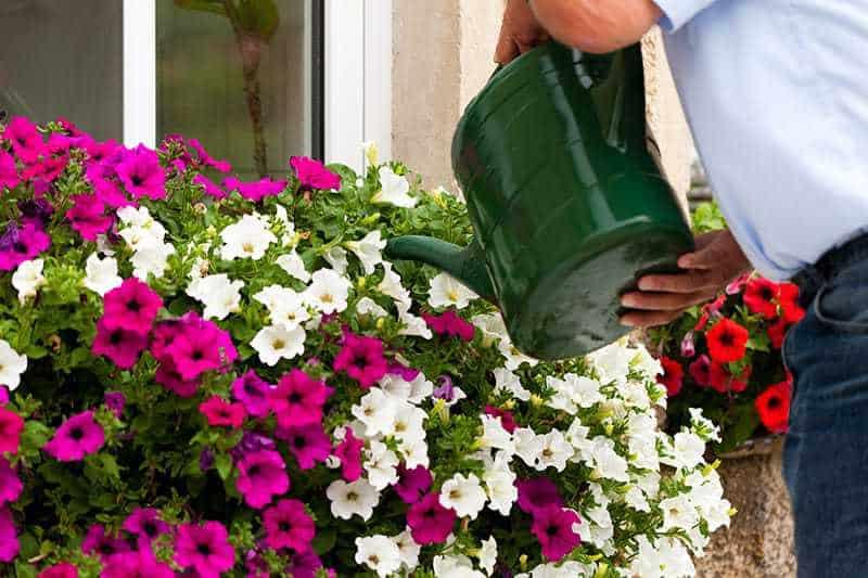 Kwiaty Balkonowe Jakie Wybrać I Jak Dbać O Rośliny Na Balkonie