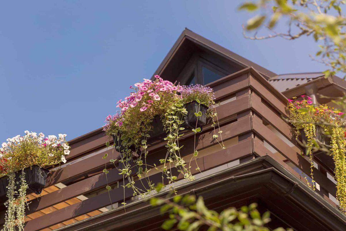 Kwiaty balkonowe: jakie wybrać i jak dbać o rośliny na balkonie?