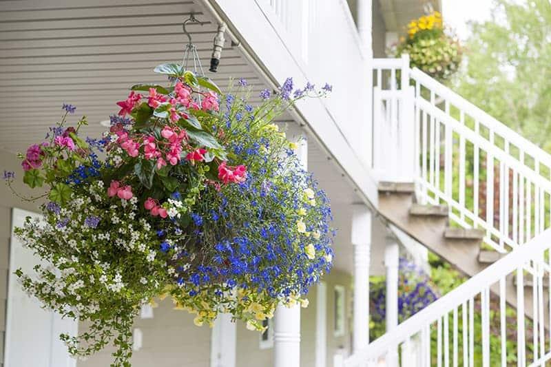 Kwiaty balkonowe zwisające