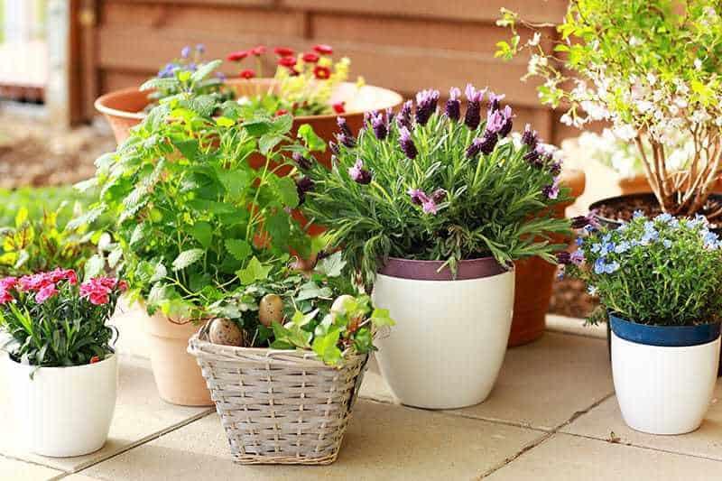 Kwiaty na balkon słoneczny