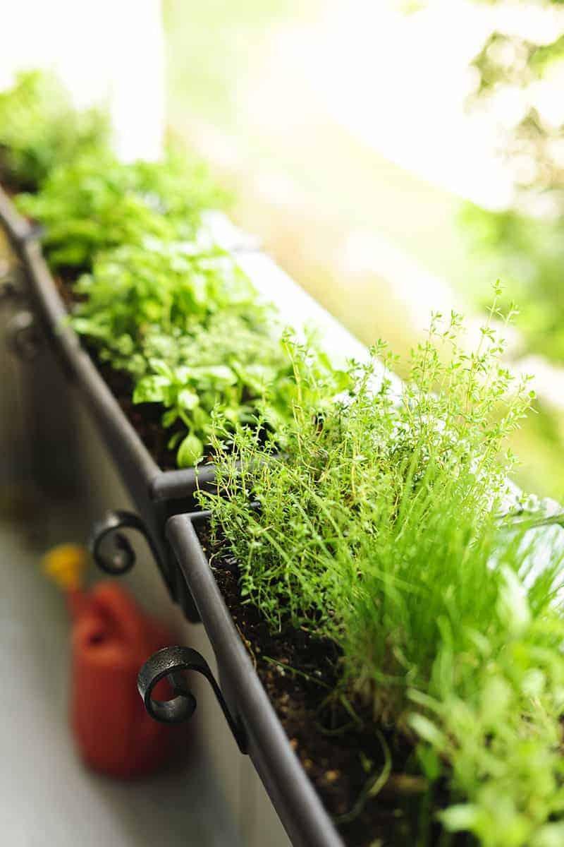 Odpowiednia ziemia pod ogródek ziołowy
