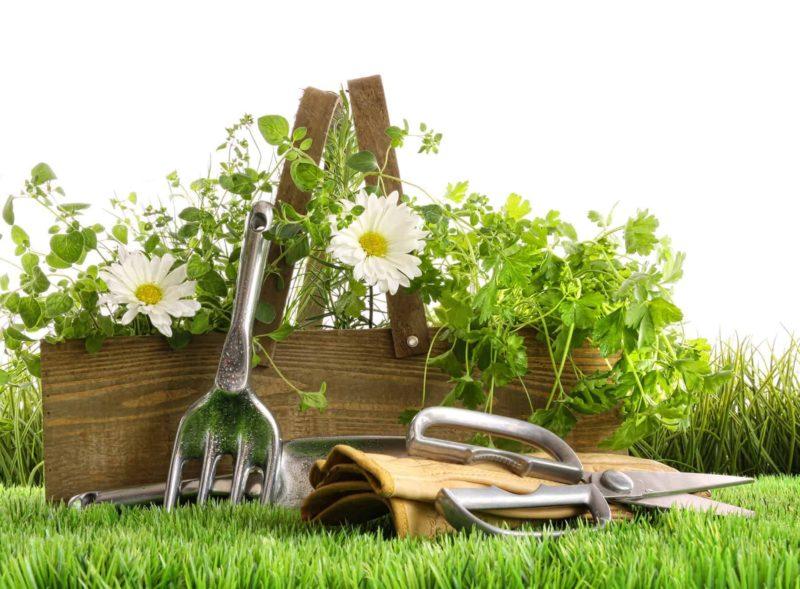 Zioła z ogrodzie: sadzenie i uprawa ziół w przydomowym ogródku