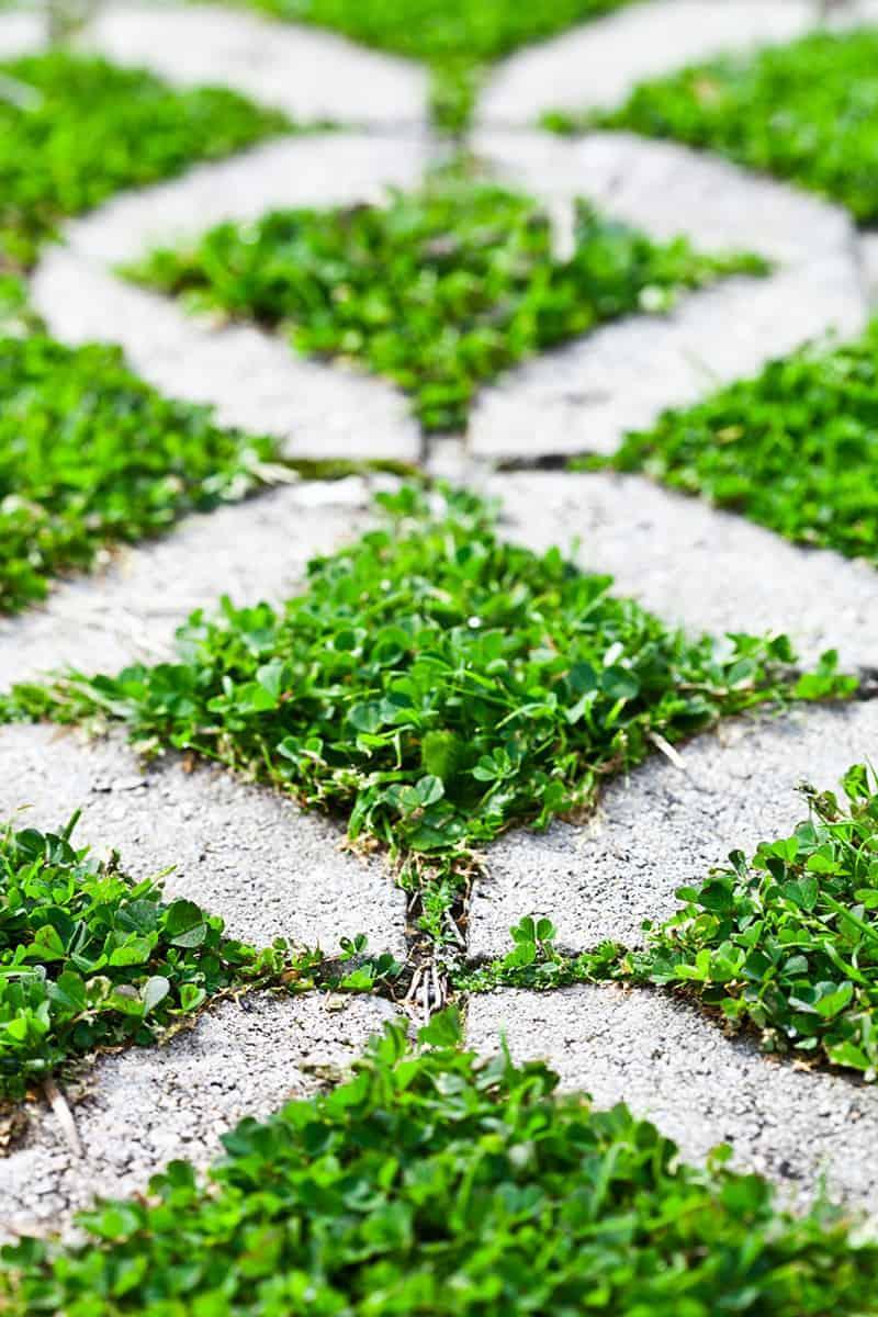 Ścieżka w ogrodzie z betonowych płyt ażurowych