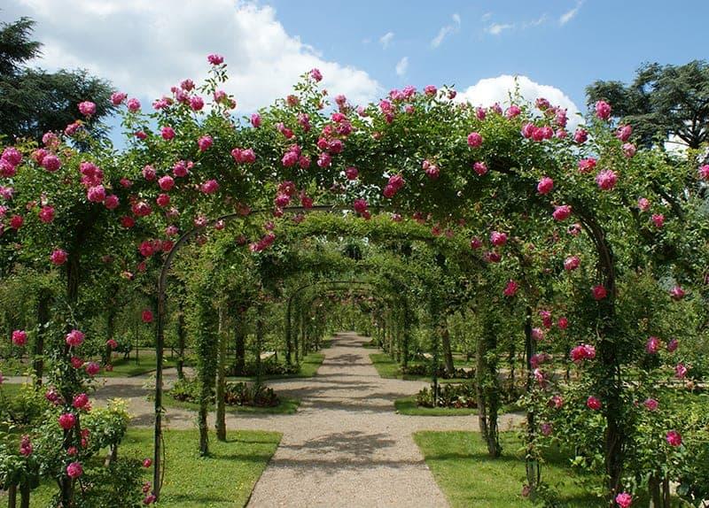 Pergola ogrodowa rodzaje
