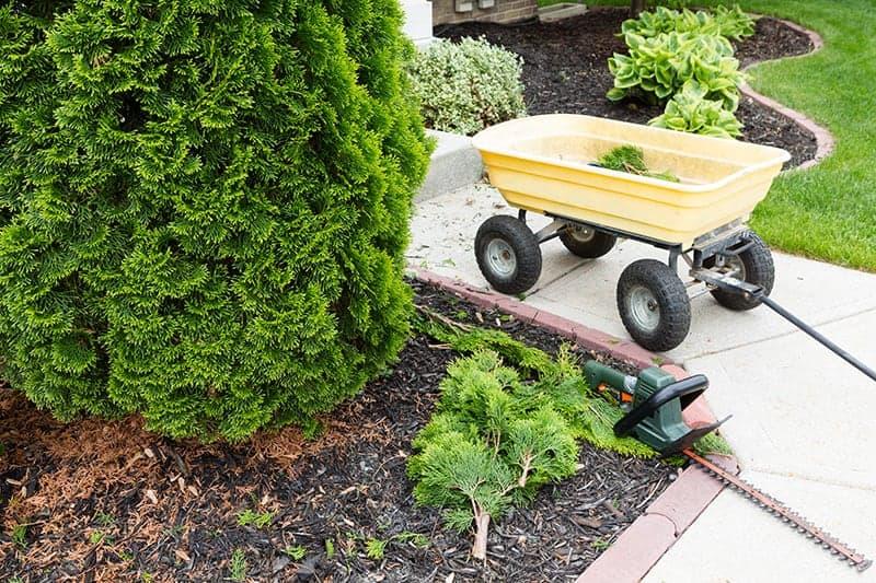 Jak zadbać o drzewa w ogrodzie