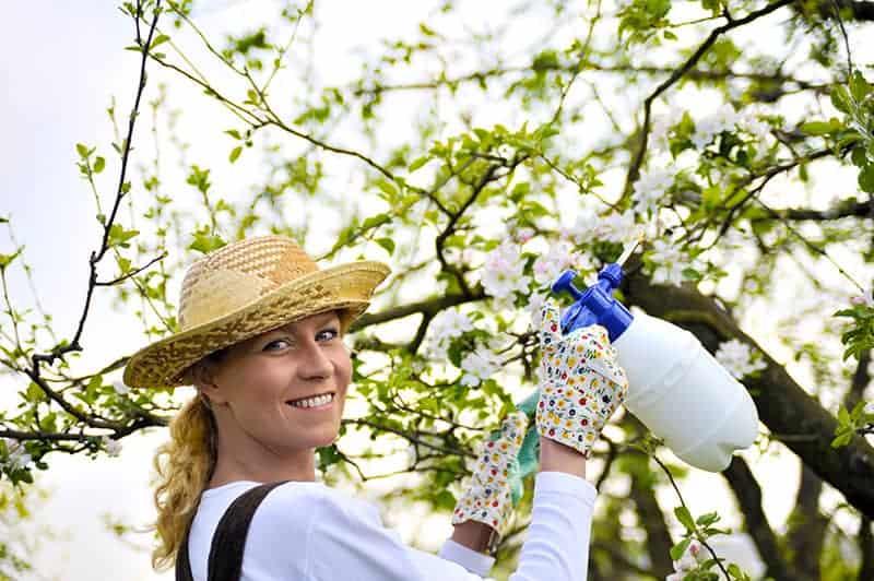 srodki ochrony roslin w ogrodzie - Środki ochrony roślin: rodzaje, ceny i stosowanie [krok po kroku]
