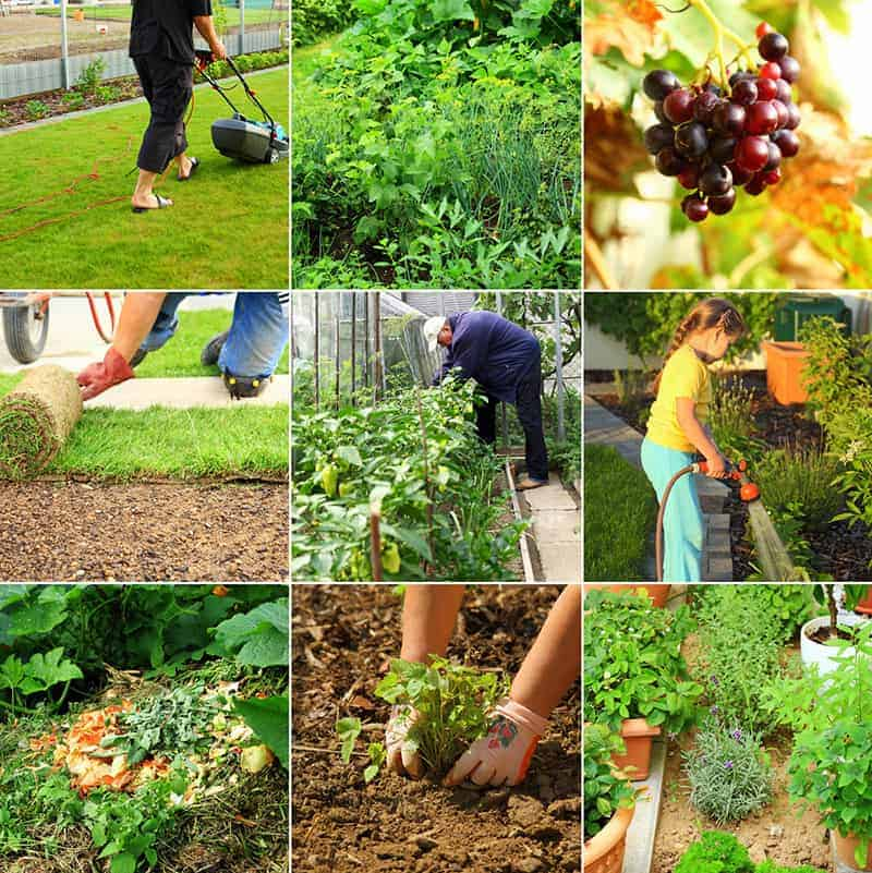 Gatunki roślin a wymagania glebowe