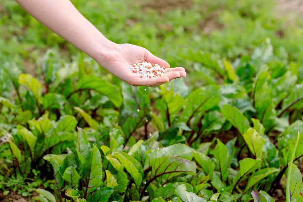 Nawozy do ogrodu warzywnego